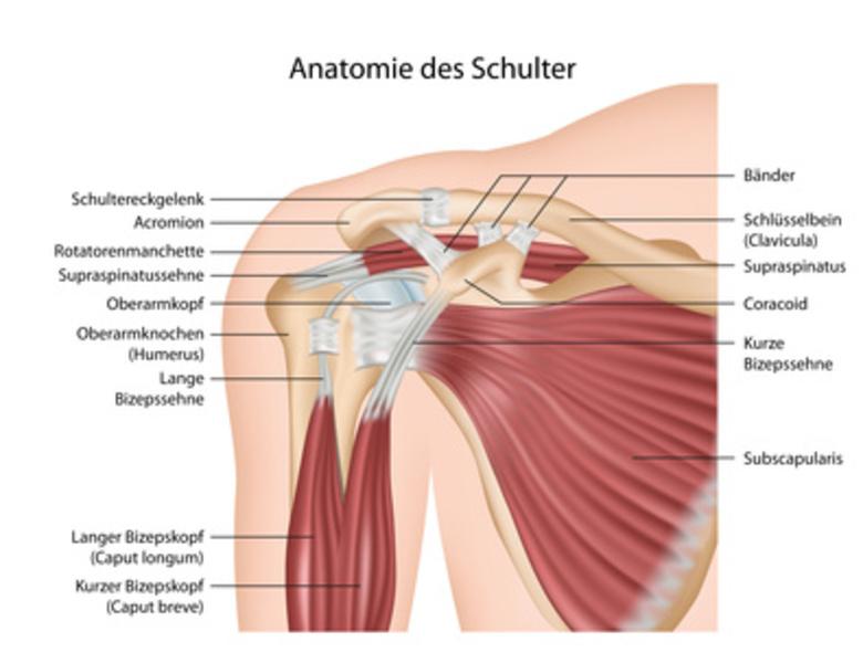 Schultergelenkserkrankungen - Orthopädische Praxis Fritzlar
